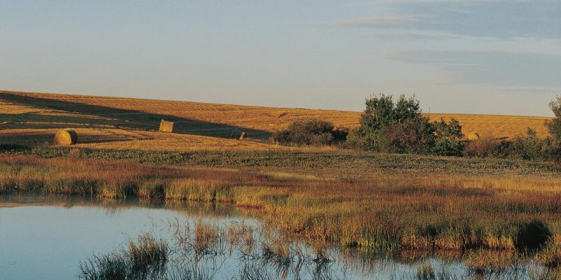 Région des fondrières des Prairies