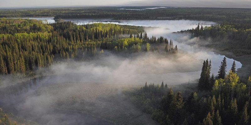 La forêt boréale du Canada
