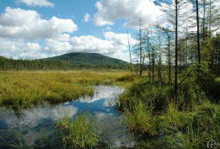 De nouveaux outils de cartographie détaillée des milieux humides maintenant disponibles au Québec