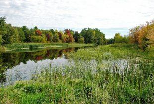 Loi sur la conservation des milieux humides et hydriques