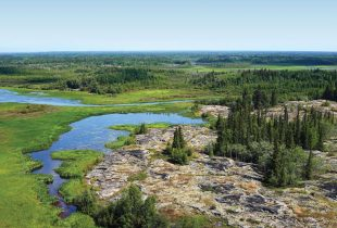 La forêt boréale, vue à vol de canard