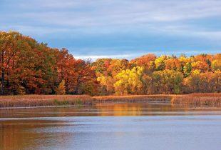 Le Québec à la défense des milieux humides