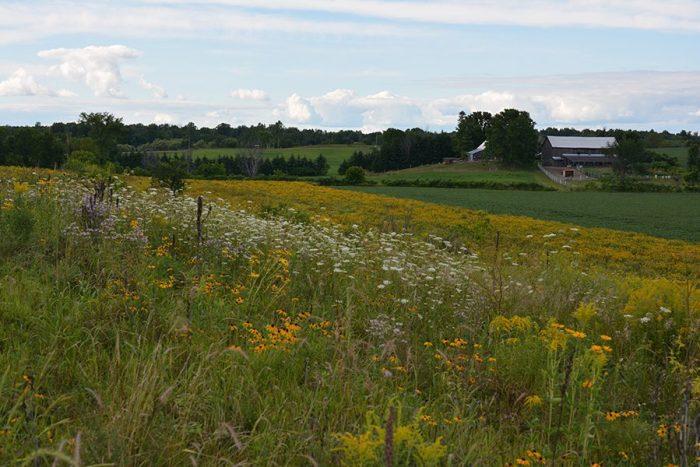 L'habitat aménagé sur le domaine de Natalie Rowe et de Gordon Campbell