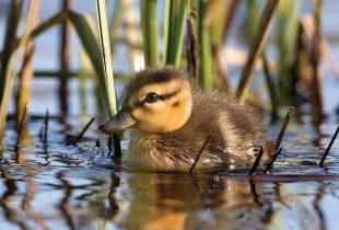 En pleine nature: Brendan Kelly, photographe de la faune