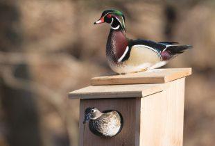 Cinq manières amusantes de promouvoir la conservation