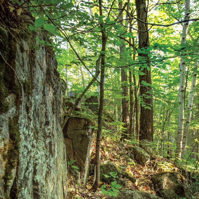 Fragiles et magnifiques, ces vieux tapis de lichen et de mousse dans les collines de Carp pourraient être endommagés ou détruits par les randonneurs et les cyclistes.