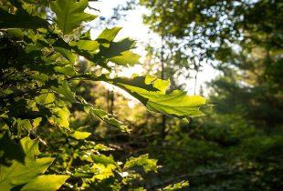 Protéger les collines les plus naturelles d'Ottawa