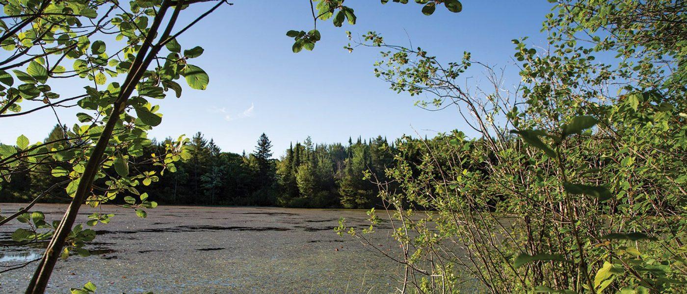 Les habitats des collines de Carp comprennent des milieux humides qui déversent de l'eau propre dans la rivière Carp grâce aux cours d'eau de surface et aux aquifères souterrains.