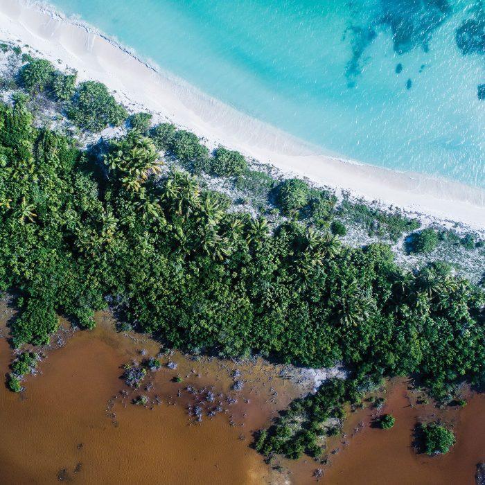 Les marécages de la mangrove du littoral du Mexique sont des havres de paix pour les oiseaux migrateurs; or, ils sont de plus en plus menacés par la crevetticulture intensive.