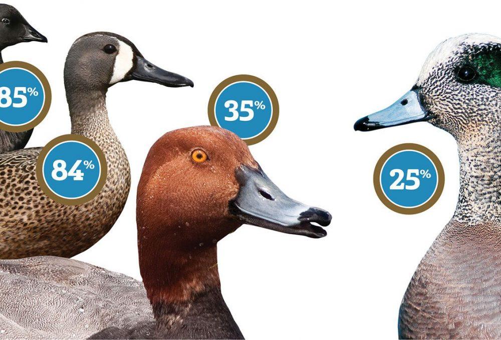 Un nombre considérable de représentants d'oiseaux migrateurs d'Amérique du Nord hiverne au Mexique.