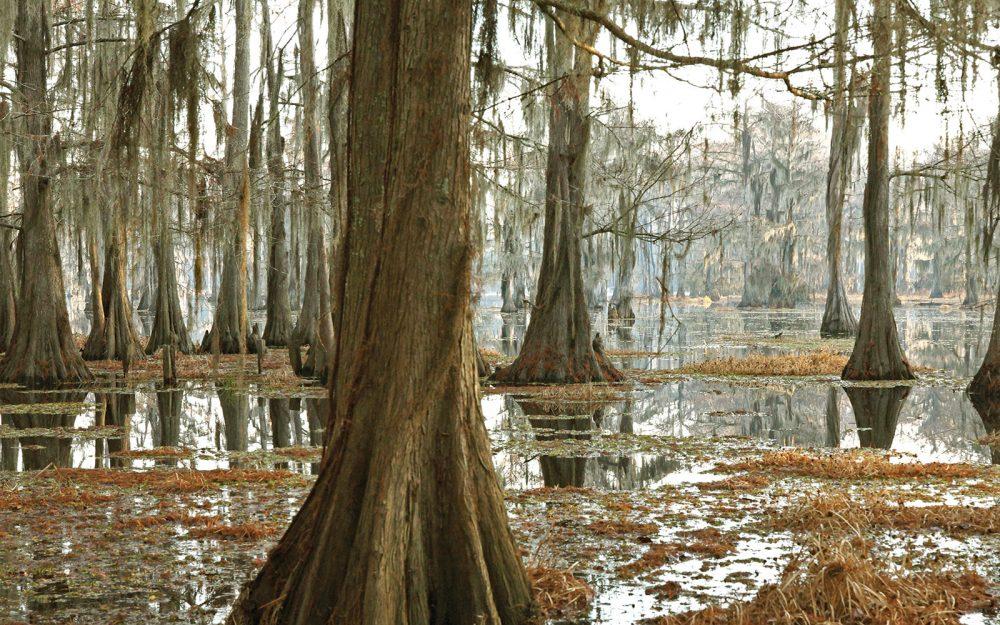 D'une envoûtante majesté, les milieux humides boisés des bas-fonds comme celui-ci, dans la vallée alluviale du Mississippi, offrent gîte et couvert au canard branchu et au canard colvert, en plus d'assurer une multitude de fonctions écologiques essentielles pour les humains, dont les loisirs et la maîtrise des inondations.