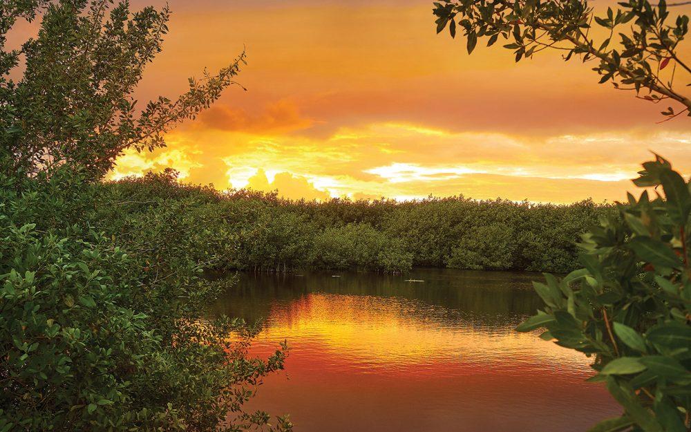 Jusqu'à 20 % de la sauvagine migratrice nord-américaine s'en remet aux marécages de la mangrove mexicaine et à d'autres habitats dans les mois d'hiver.
