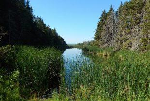 Le gouvernement du Canada et Canards Illimités Canada s'engagent à sauvegarder d'importants habitats dans quatre réserves nationales de faune