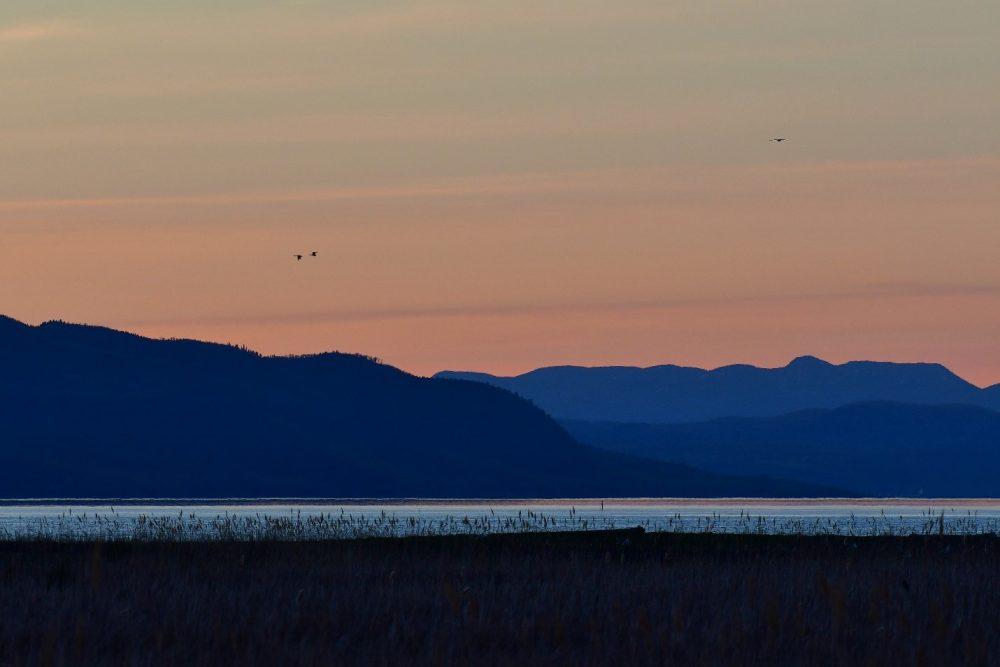 L'île aux Loups Marins, un territoire protégé par Canards Illimités, a accueilli quatre participants de l'édition 2018 du Grand Défi QuébecOiseaux.