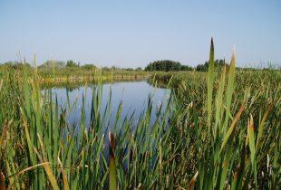 Le Programme de conservation du patrimoine naturel assure une nouvelle protection des milieux humides du Canada