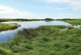 Canards Illimités Canada mène à bien la campagne historique Sauvons nos milieux humides  Sept années d'efforts voués à la conservation de plus de 263 046 hectares d'habitats essentiels