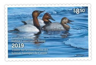 La vente de timbres de canard du Canada aide à financer la conservation
