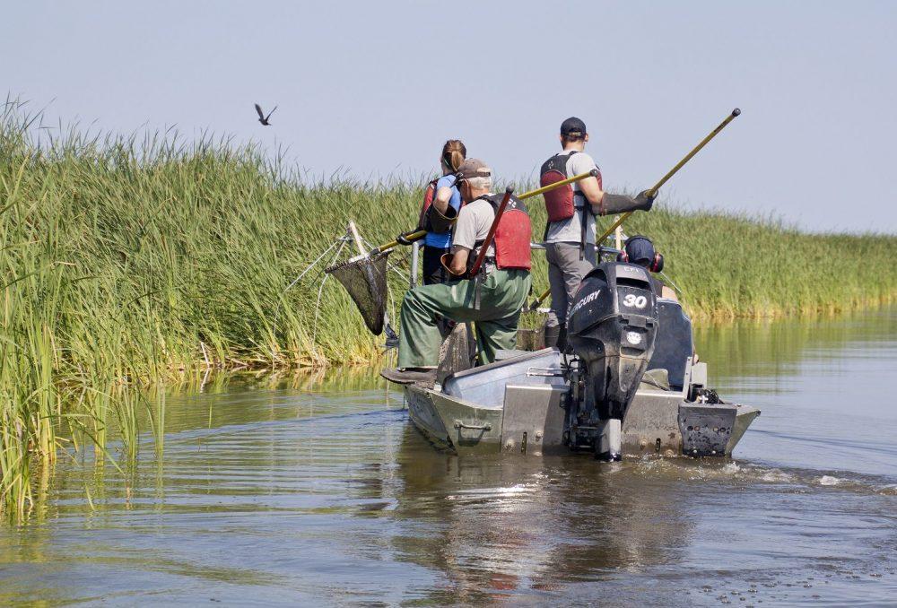 CIC a fondé une chaire de recherche universitaire dans la conservation des milieux humides et de la sauvagine à l'USask, pour former et mentorer les scientifiques, les conservationnistes et les gestionnaires de la faune de demain.