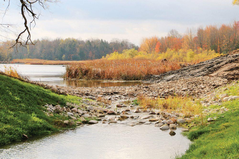 Grâce aux travaux de restauration de CIC et de ses partenaires, Cedar Creek a repris sa vocation originelle de cours d'eau : son lit est jonché de roches et de rondins qui font de l'ombre pour les poissons et qui permettent aux tortues de se prélasser au soleil.