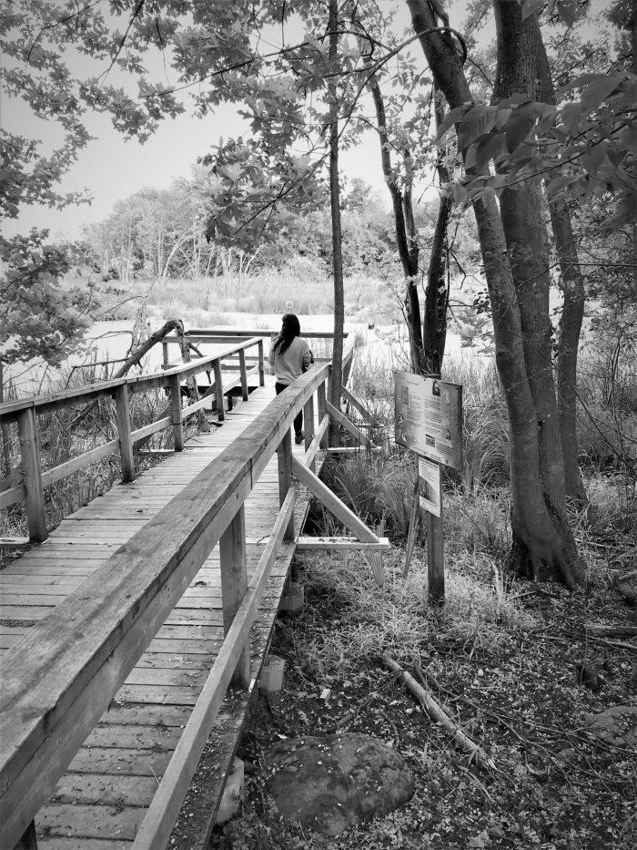 Par ailleurs, Héritage Saint-Bernard offre de nombreuses activités entre autres l'observation de la nature grâce à des sentiers d'interprétation et un rallye numérique du refuge