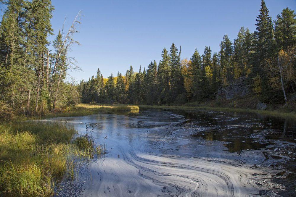 Les milieux humides de la forêt boréale