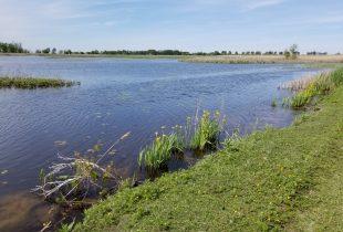 Canards Illimités Canada salue l'acquisition du marais St. Luke dans la région du lac Sainte-Claire