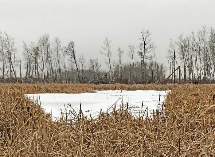 Plus de 17hectares de milieux humides et de prairies, d'arbustes et d'arbres seront préservés sur la propriété.