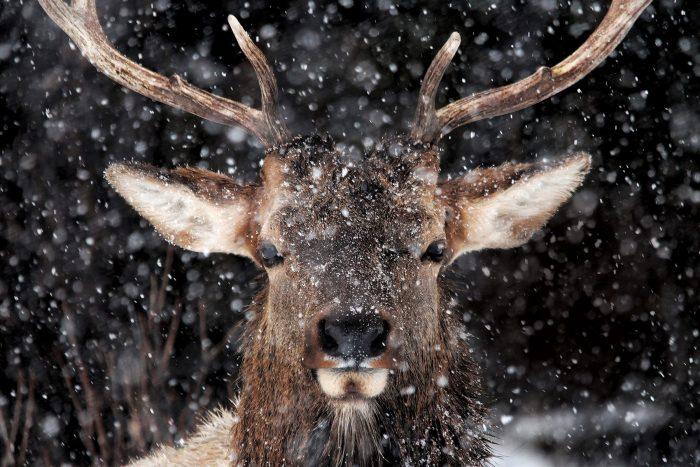 Parc national Banff, en Alberta