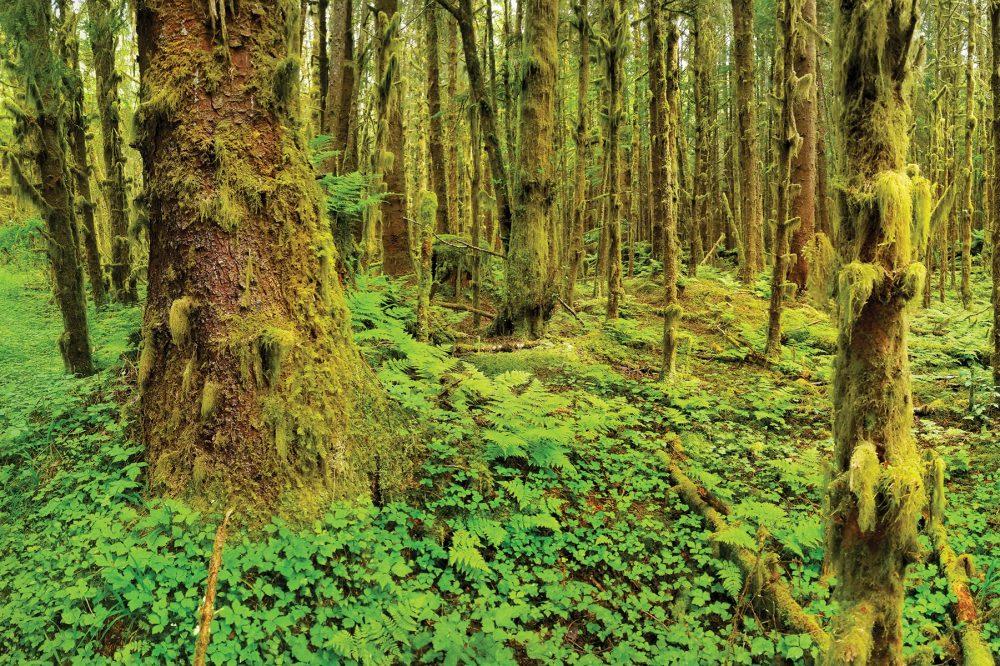 Haida Gwaii, en Colombie-Britannique
