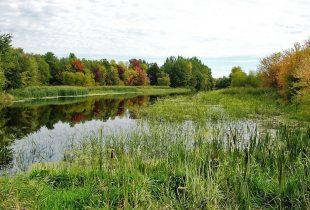 Les zones humides et l'eau : indispensables à la vie