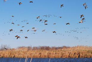 Les grands professeurs de la nature : Ce que les oiseaux que nous chérissons peuvent nous apprendre à l'occasion de la Journée internationale des oiseaux migrateurs