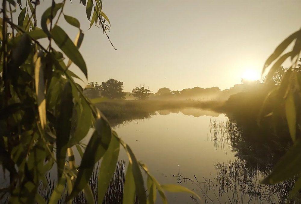 Les milieux humides offrent toutes sortes de cobienfaits environnementaux, qui nous aident à maîtriser les répercussions des changements climatiques