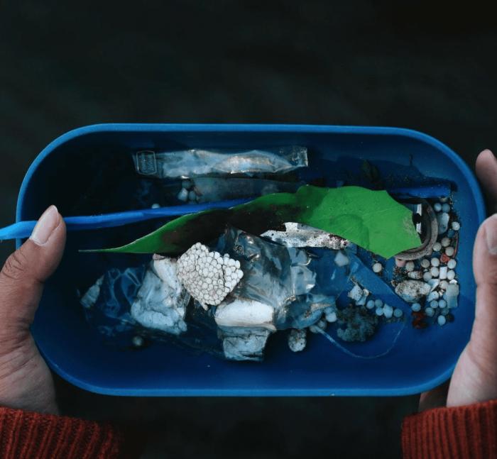 Plastiques ramassés dans les milieux humides de l'île Petrie.