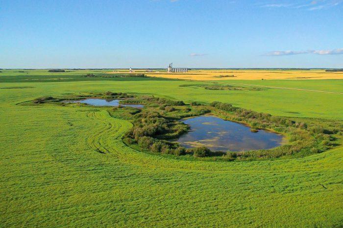 Zones humides des prairies