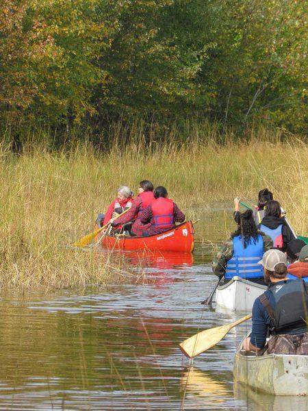Préserver les milieux humides du Wolastoq